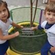 Crianças colocam as placas de identificação das novas árvores